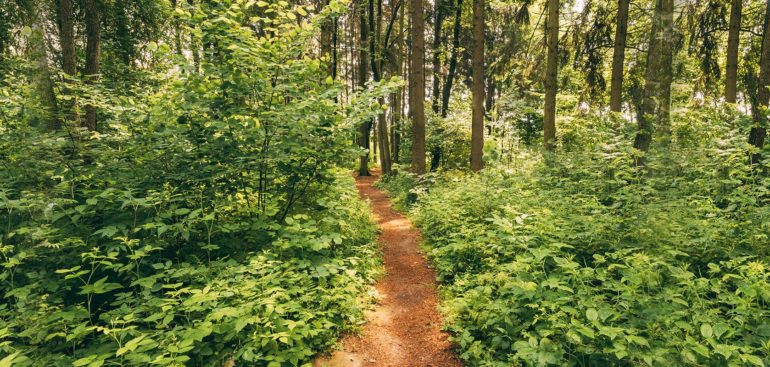 beautiful-path-lane-walkway-way-in-summer-forest-PQ6SM7P (1)