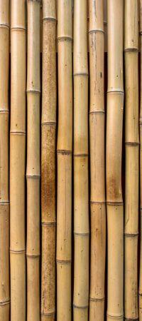 bamboo-texture