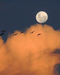 moon, sky, clouds