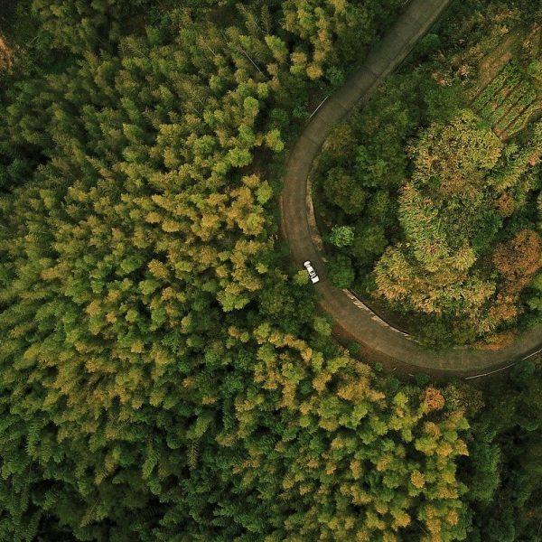 uav, forest, tree